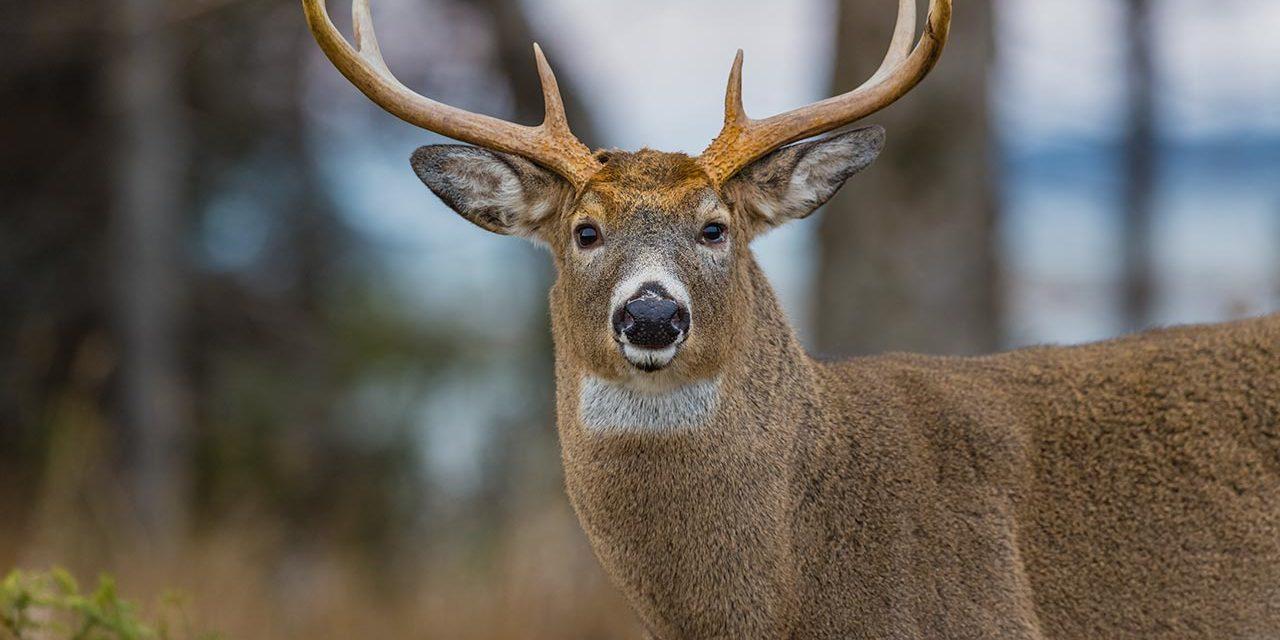 Comment avoir son permis de chasse ?