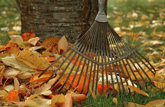 Quels sont les travaux de jardinage à réaliser en automne ?
