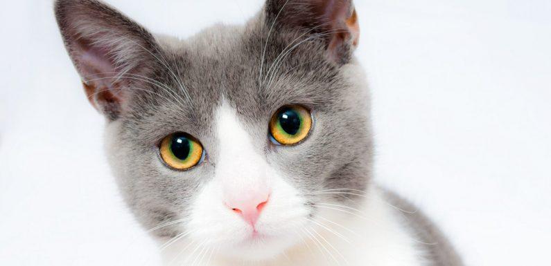Guide pour bien accueillir votre chaton